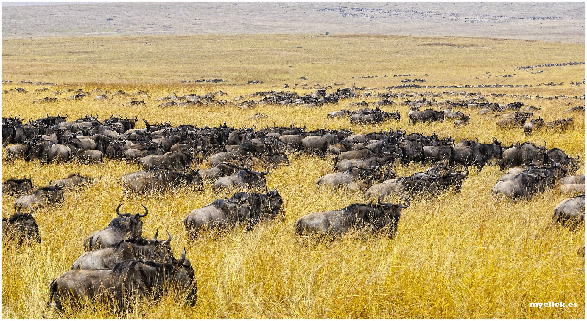 MEMORIAS DE AFRICA -LA TARDE QUE LLEGUE AL MARA -PN MASAI-MARA KENIA