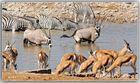 MEMORIAS DE AFRICA-LAS CHARCAS 2 -PN ETHOSA NAMIBIA