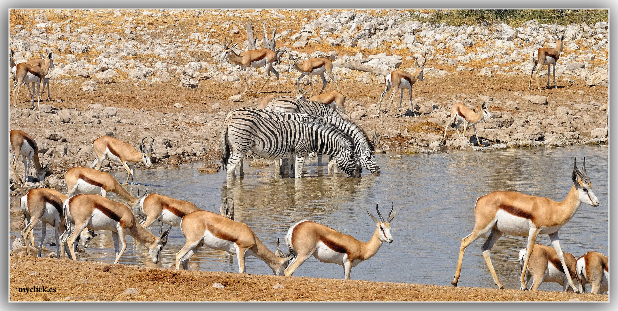 MEMORIAS DE AFRICA-LAS CHARCAS -PN ETHOSA NAMIBIA