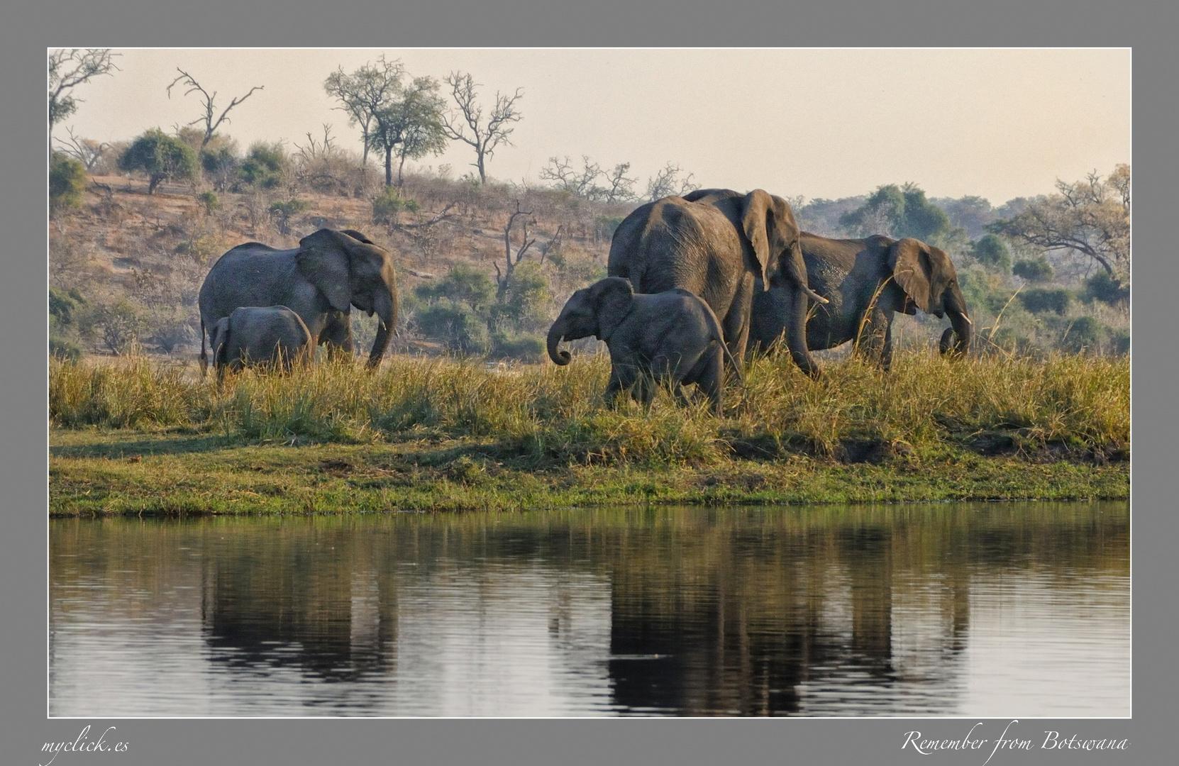 MEMORIAS DE AFRICA-REUNION DE ELEFANTES-PN MOREMI-BOTSWANA