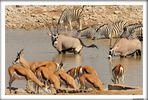 MEMORIAS DE AFRICA-TODOS EN LA CHARCA-ETHOSA-NAMIBIA