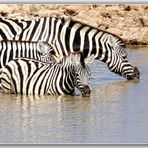 MEMORIAS DE AFRICA- TRES CEBRAS LAS CHARCAS 3 -PN ETHOSA NAMIBIA