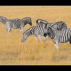 MEMORIAS DE AFRICA-UNAS CEBRAS- PN DE ETHOSA-NAMIBIA