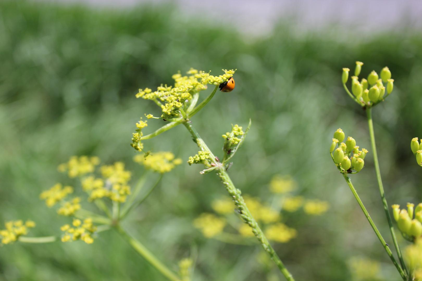 memories & ladybird