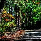 Memories of Autumn - A Wildwood Trail Impression