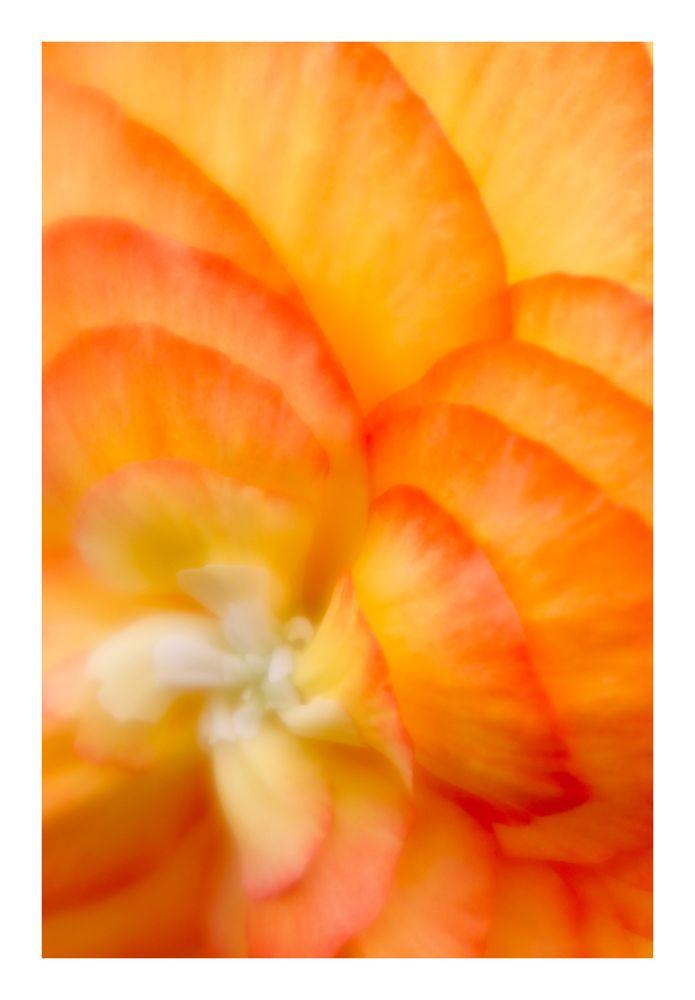Memories of Orange