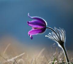 memories of spring2
