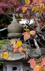Memory of Kamakura
