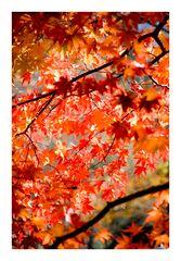 Memorye of Autumn