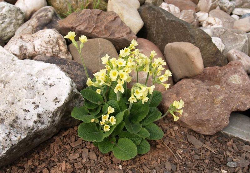 mensarejo primavera
