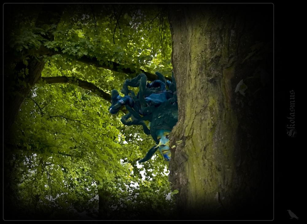 Mensch und Wald = Waldmensch