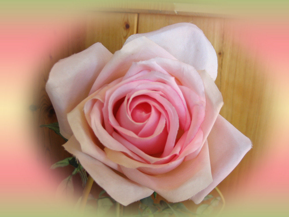 Menschen sind wie Rosen!