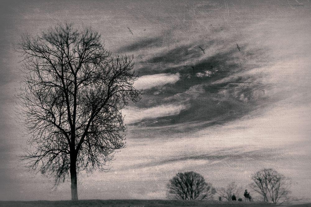 Menschen und Bäume