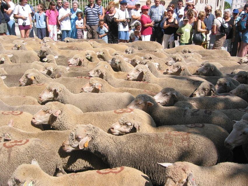 Menschen und Schafe