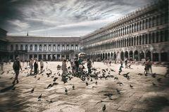 Menschen und Tauben