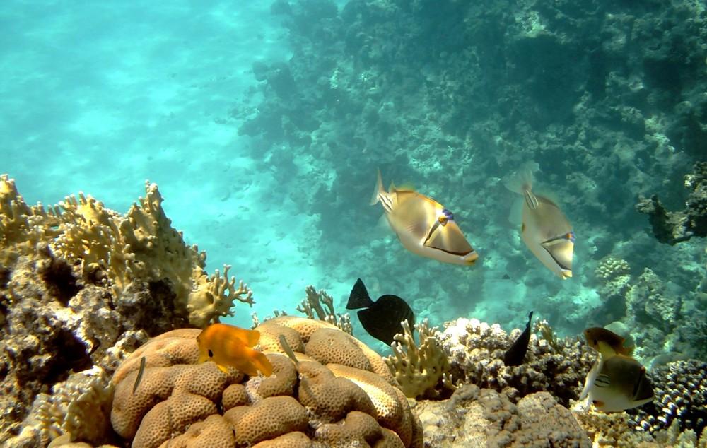 Meraviglie del Mar Rosso
