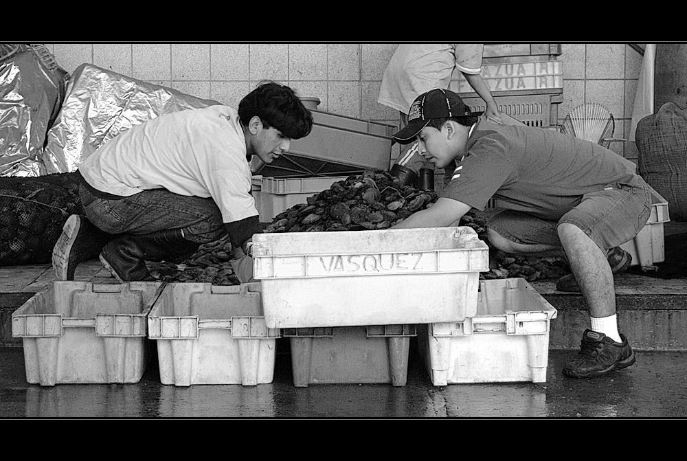 Mercado de pescado (4)