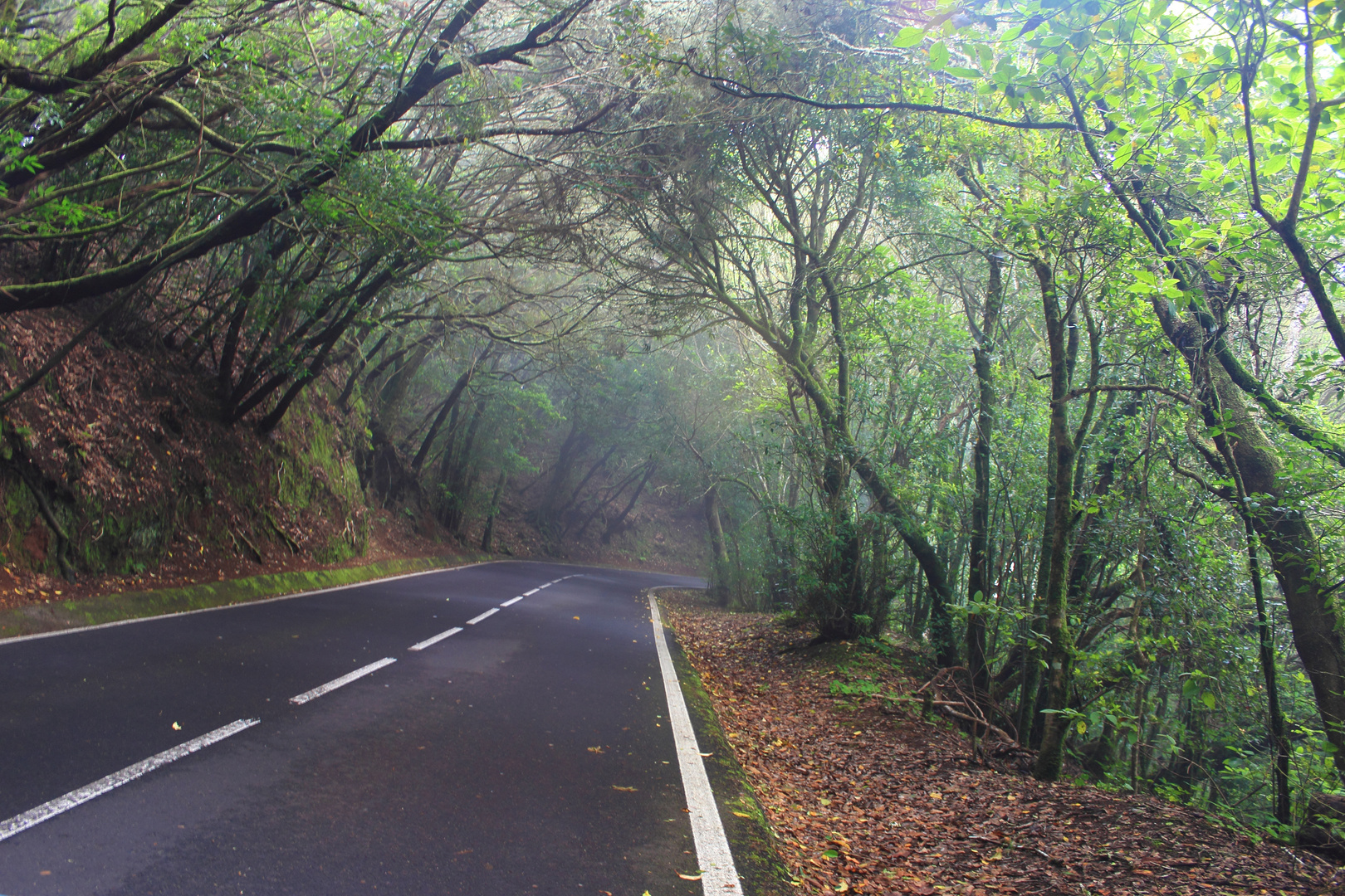 Mercedes-Wald