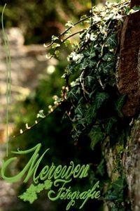 Merewen