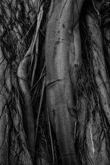 merged tree