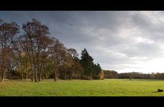Merheimer Heide Novemberwetter