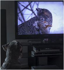 Merlin und die Tierfilme