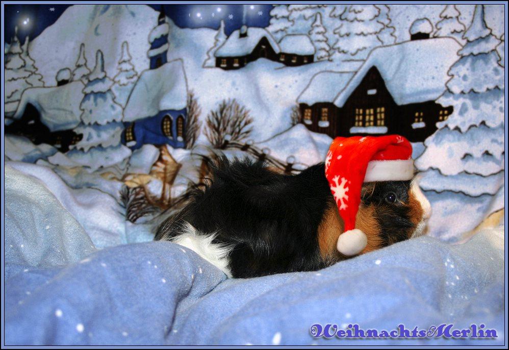 Merlin´s Weihnachtstraum...