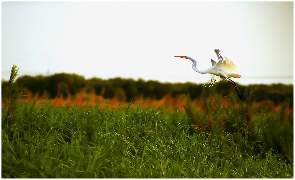 Merritt Island - National Wildlife Refuge