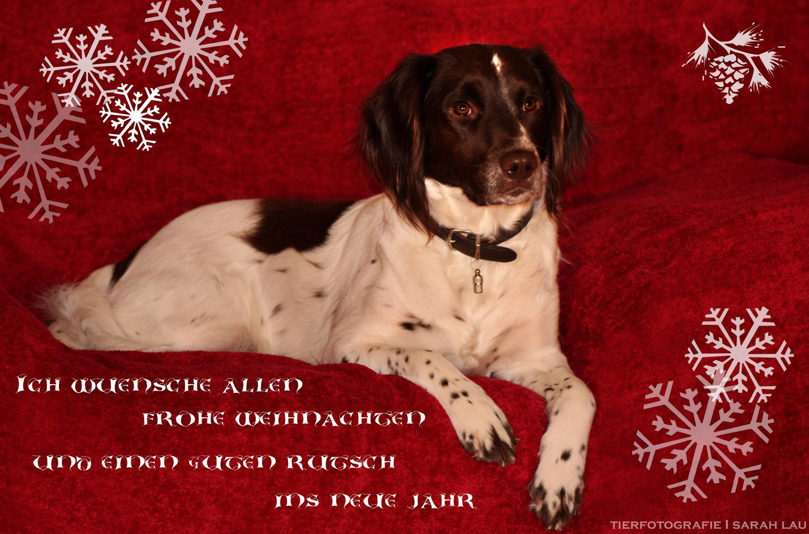 Weihnachtskarten Tiere.Merry Christmas Foto Bild Karten Und Kalender Weihnachtskarten