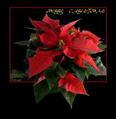 Merry X'mas from Japan