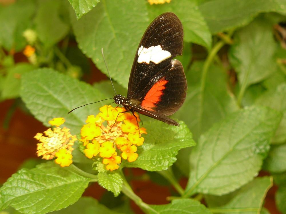 Merveilleuses petites ailes.....