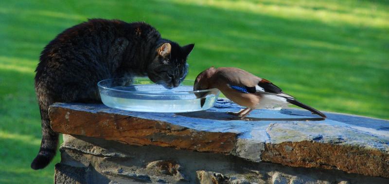 """Mes amis de """"la fontaine"""""""