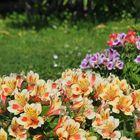 Mes couleurs libres du jardin le dimanche