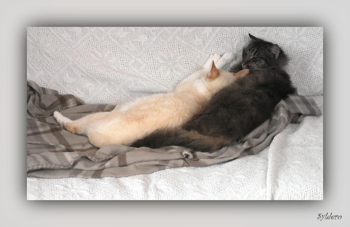 Mes deux chats en plein effort....