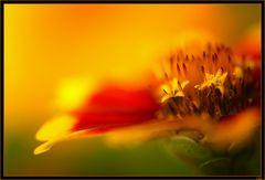 Message de fleur 1 (Message of flower)
