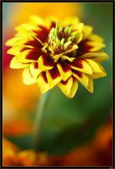 message de fleur 2