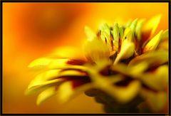 message de fleur 3