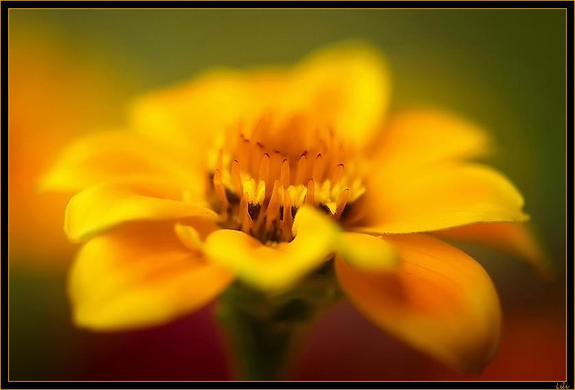 message de fleur 4