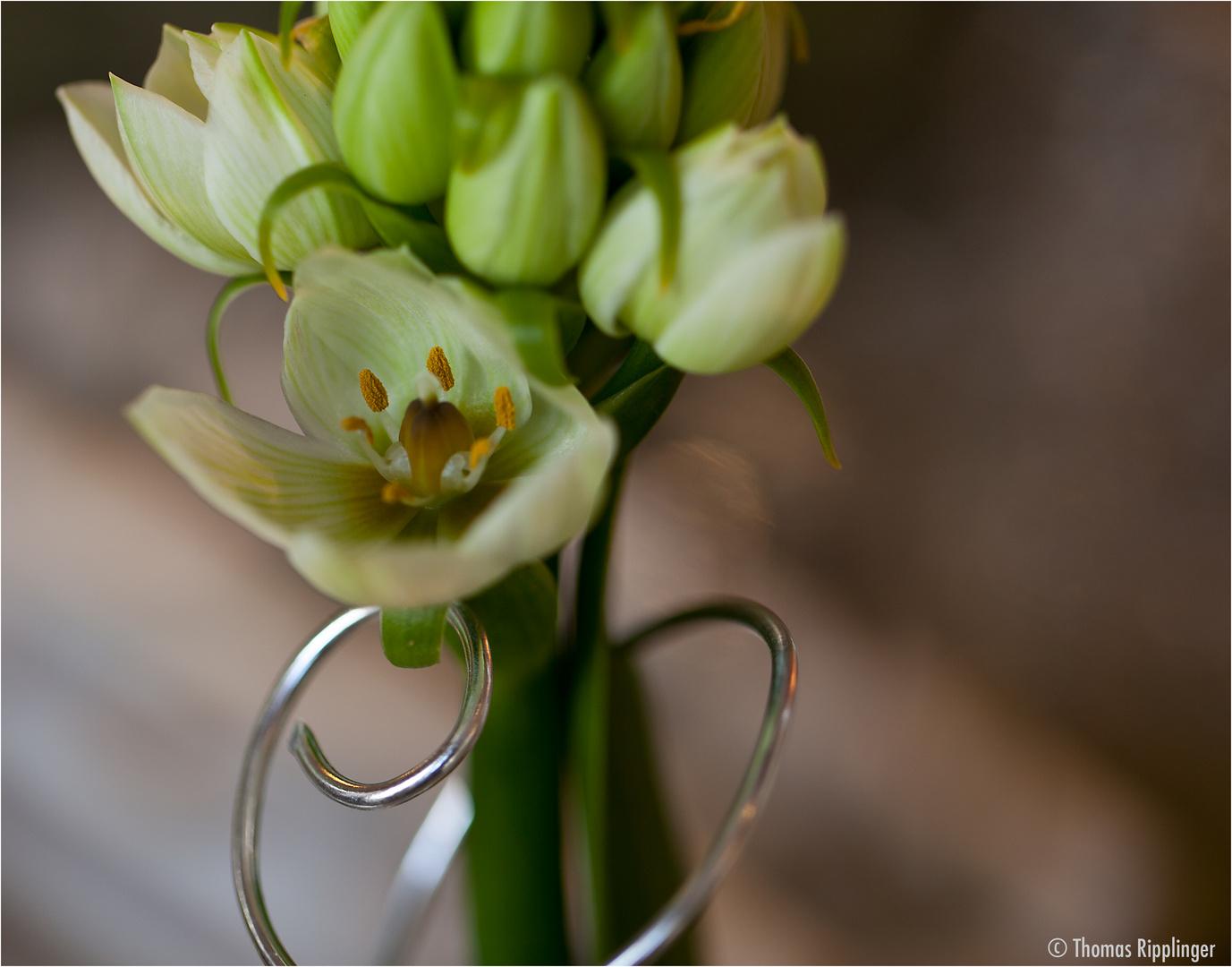 Metall und Blume....
