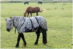 Metamorphose in der Tierwelt