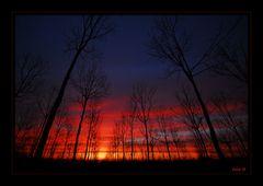 Metti l'alba dentro ad un pioppeto....