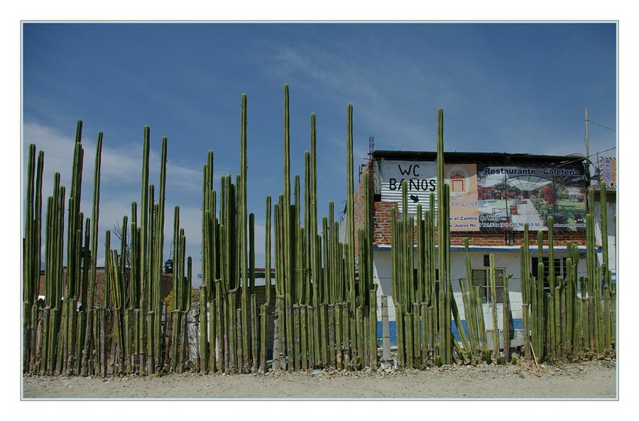 Mexikanischer Zaun