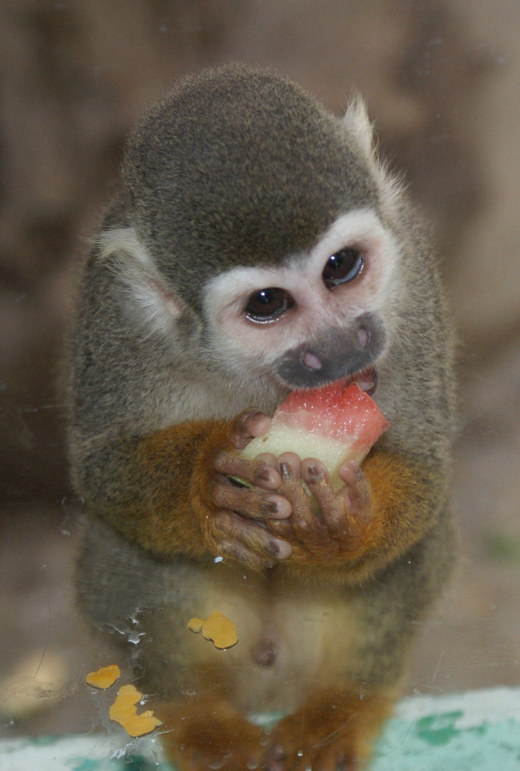 "Mi fruta ""tras el vidrio"""