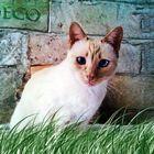 Mi gato deco