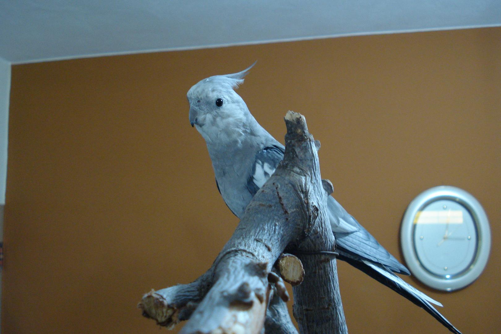Mi ninfa en su árbol