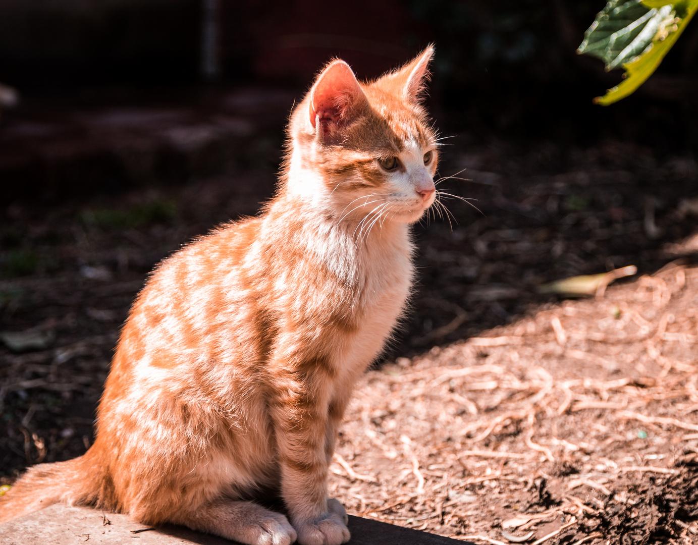 Mi pequeño gato amarillo