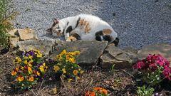 Mia der Gartenchef seit knapp drei Jahren, die jeden Morgen am Gartentor auf uns wartet...