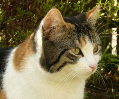 Mia - fröhlich im Garten :-)
