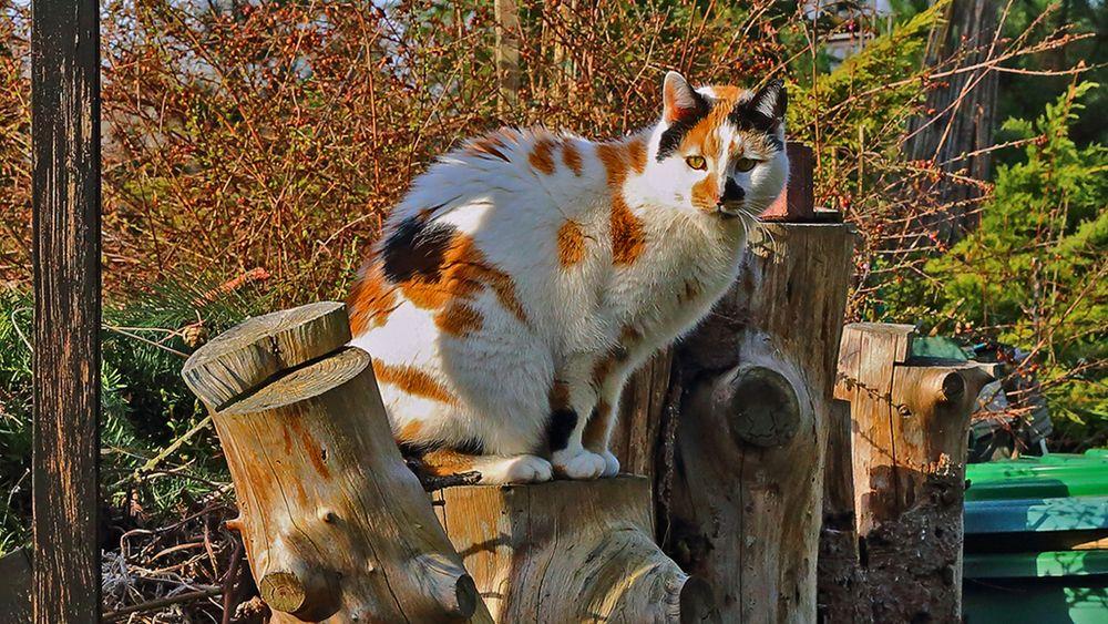 Mia lebt im Garten richtig auf, wenn wir jetzt wieder früh länger da sind...