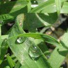 Mia pioggia di sale cosa fi su un filo d'erba?
